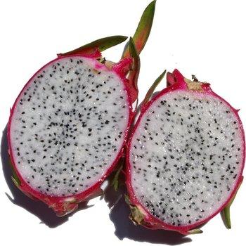 Fresh Dragon Fruit for USA market