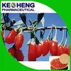 Organic dried goji berry, wolfberry/Healthy fruit ningxia wolfberry goji extract powder/100% natural goji wolfberry provided