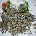 de semilla de girasol casco negro de confeccion