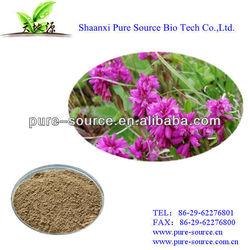 Siberian Milkwort Extract ratio 10:1