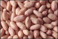 Peanut Kernels : 24/28-28/32-32/36-36/40