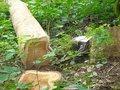 Teak legno ( quality ) direttamente dalla fonte