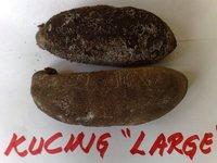 seacucumber