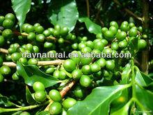 Vietnam Arabica Green Coffee Beans Extract Powder