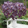 AF302-D purple,silk decorative orchid flowers,artificial orchid