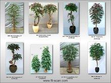 Bamboo, Capensia, Mango, Longifolia, Bougainvillea Tree