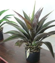 Planta agave Artificial como real plantas