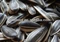 semillasdegirasol tostador de aves de aceite a granel para la venta