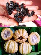 Goraka (Garcinia quaesita Pierre) spices