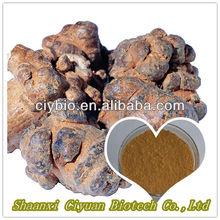 2013 Hot Sale Top Quality 100% natural Radix Notoginseng extract Powder
