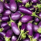 Egg Plant