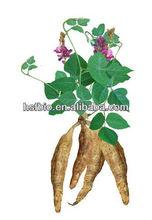 Pueraria Lobata Root