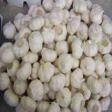 2013 Cheap Price Pure White Garlic Trading Company