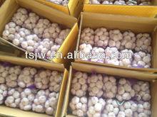 shangdong garlic for world market