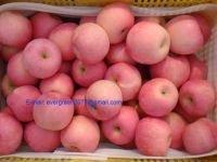 Fresh Red Fuji Apples Fruit
