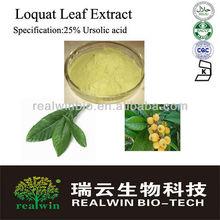 100% Natural Loquat Leaf Extract Ursolic acid 25%