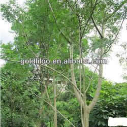 Free Sampl/GMP/ ISO9001/ Factory Supply/ 100% Natural /Moringa oleifera Extract /leaf, seed, root, bark,pod