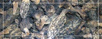 Himalayan Morel Mushrooms