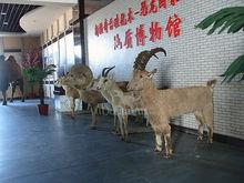 Animatronic Goat for Museum Exhibition