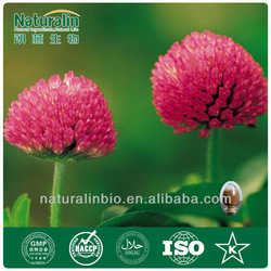 Pure Natural Red Clover Extract Powder 2.5% Isoflavones