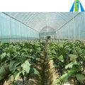 100x8m agrícola estufa de plástico para venda