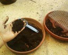 Organic Vermi Compost Fertilizer