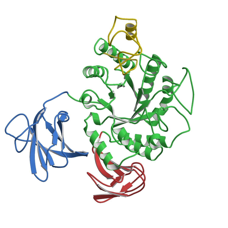 ألفا إنزيمات الأميليز