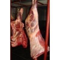 halal carne de vacuno de la canal