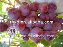 New harvest & top sweet & lowest price & china origin