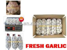"LW-2013 "" Shandong Fresh Organic Garlic"" - Eu quality"