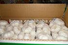 "LW-""2013 China Fresh White Garlic"" - (low price, Eu quality)"