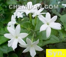 Jasmine Fragrance Oil (100% Concentrated Synthetic Fragrance)