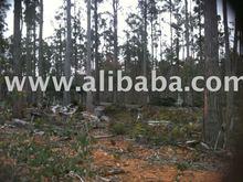 Timber, Wood
