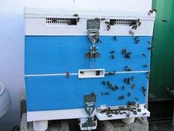 plastic bee hive