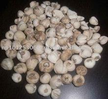 Bulbus Fritillariae Uninbracteatae Himalayan Medicinal Plant Products