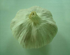 Chinese pure white fresh garlic with competitive price for sale