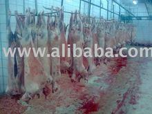 SHEEP MEAT(LAMB)