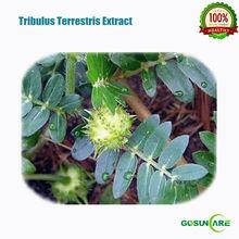 Natural Protodioscin 20%/40% HPLC Total Saponins 40%/60%/80% UV Tribulus Terrestris P.E.