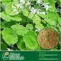 Los hombres suplemento a base de hierbas cápsula, natural de productos del sexo, 100% natural suplemento de la salud