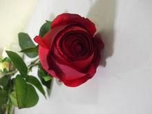 Artificial elegant rose used to indoor decoration