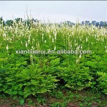 Good Quality Black Cohosh P.E. Triterpene 5%