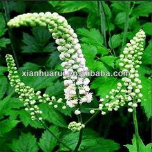 Good Quality Black Cohosh P.E. Triterpene 2.5%, 5%, 8%