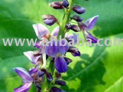 Pueraria mirifica extract - Puresterol