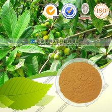 Natural loquat leaf extract 4:1,10:1,20:1