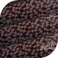 mar coral natural cor de chocolate da folha de transferência para a decoração do bolo