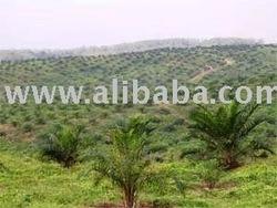 Dijual Perkebunan Kelapa Sawit dan pabriknya 10,000 hectare di Propinsi RIAU INDONESIA