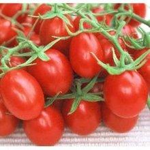 Fresh Plum Tomato