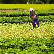 Organic Manure / Natural Fertilizer