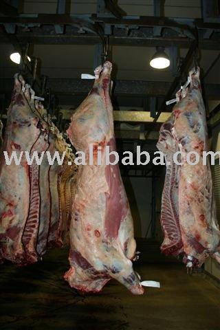 Halal carne / cordero / cabra / cordero toda canal de exportación