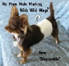 Disposable Male Dog Belly Wraps